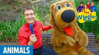 The Wiggles Brush Your Pet's Hair