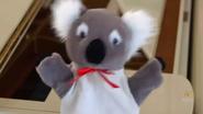 KoalaLullaby31