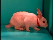 RabbitJoseph