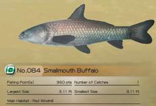 Smallmouth Buffalo