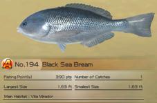 Black Sea Bream