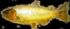 Dorado AD