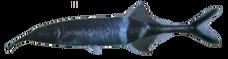 ElephantnoseFish