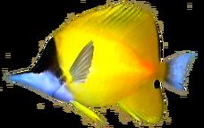 Forceps Fish AD