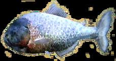 Piranha AD