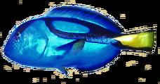 Blue Tang AD