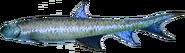Cheiracanthus