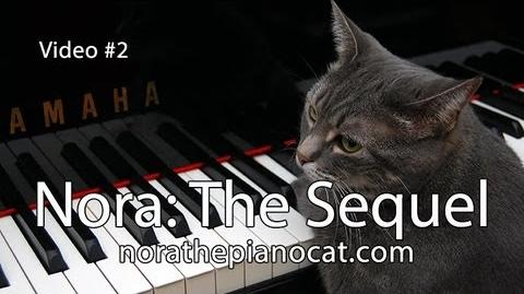 Nora The Piano Cat The Sequel - Better than the original!