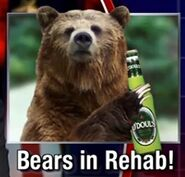 Drunken bears in rehab
