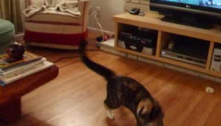 Anya Action Kitty