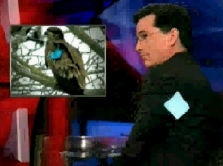 Colbert-and-Stephen-Jr