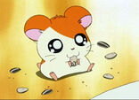Hamtaro comiendo semillas