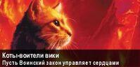 Баннер Коты-Воители Вики8