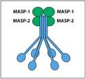 MASP1 MASP2