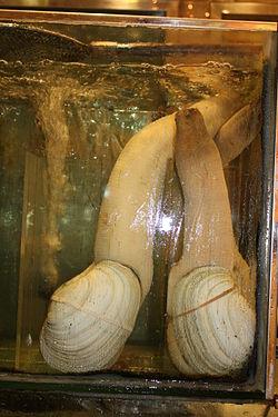 250px-2009 Mollusca in Hong Kong