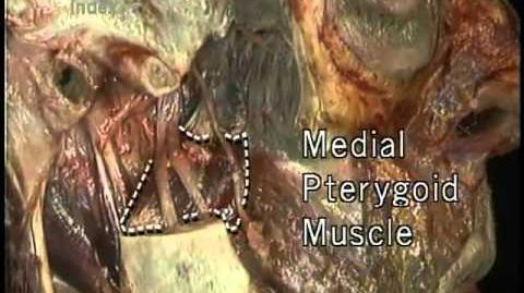 Nervos cranianos.mp4