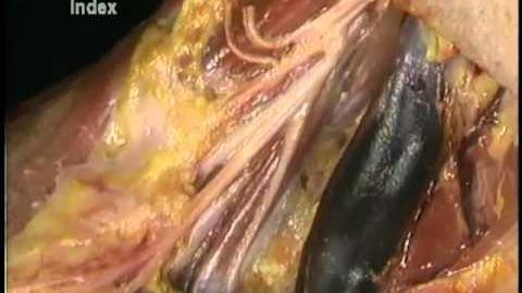 Plexo cervical.mp4