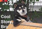 20533 cooldogdone