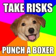 Advicedog6