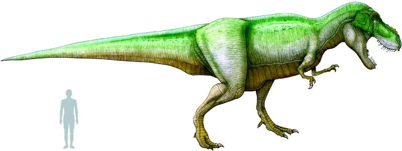 Image tyrannosaure de wiki wikimon france - Liste des dinosaures carnivores ...