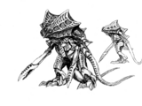 Scorpitis