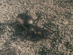 Giant Ant Godman