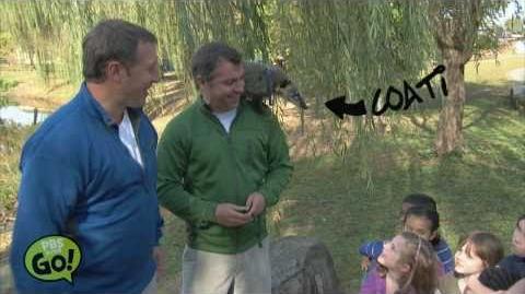 Wild Kratts Coati PBS KIDS GO!