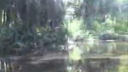 EatTheWeeds Episode 24 Wekiva River