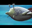 Reef Glider