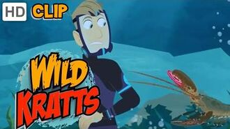 Wild Kratts - Lobster Life