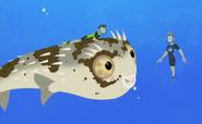 Blowfish.019