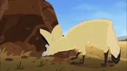 Bat-eared Fox Sniffing