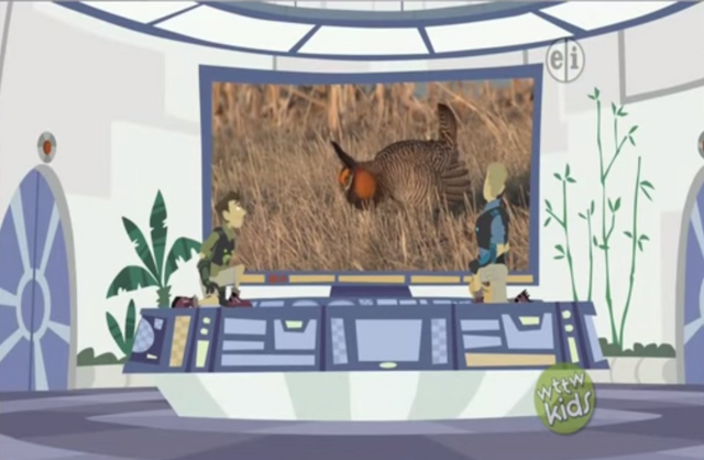 File:Prairie Chicken on Screen.png