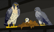 Falcon.city.wildkratts.0001
