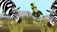 Chris looking at Zebras eating grass