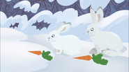 Rabbits with Carrots