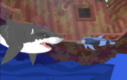 Dolphin.shark.wildkratts.0020