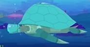 Tortuga.ocean.1