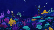 Colorful Coral Reef!