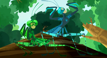Praying Mantis Bros