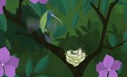 Hummingbird Wild Kratts.41