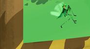 Praying Mantis Chris