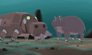 Hippo.wk.sub.08