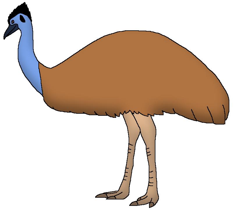 1efb1d8e2e Emu   Wildlife Animal Pedia Wiki   FANDOM powered by Wikia