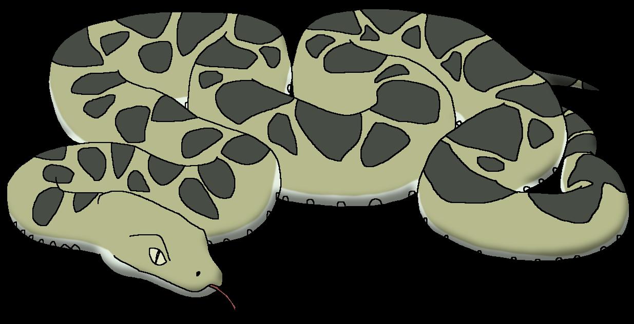 Boa Constrictor Wildlife Animal Pedia Wiki Fandom