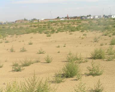 Habitat, Scrubland
