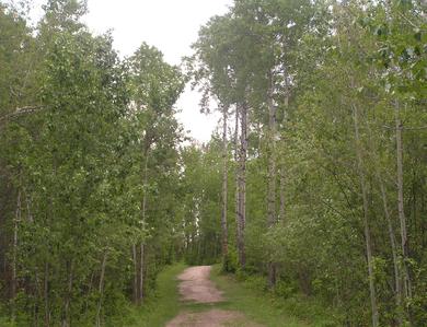 Habitat, aspen woodland