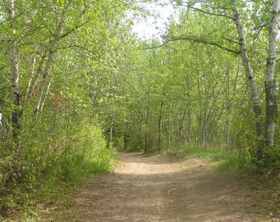 Habitat, basicwoodland