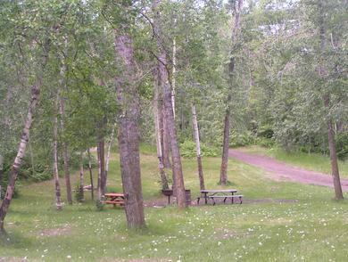 Habitat, open woodland