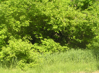 Habitat, woodland edge